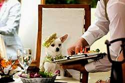 Sirviendo a un perro en bandeja