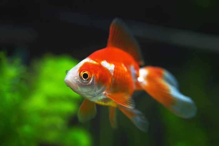 Los peces, como algunos hombres, sólo son sensibles a las pequeñas cosas que los rodean.