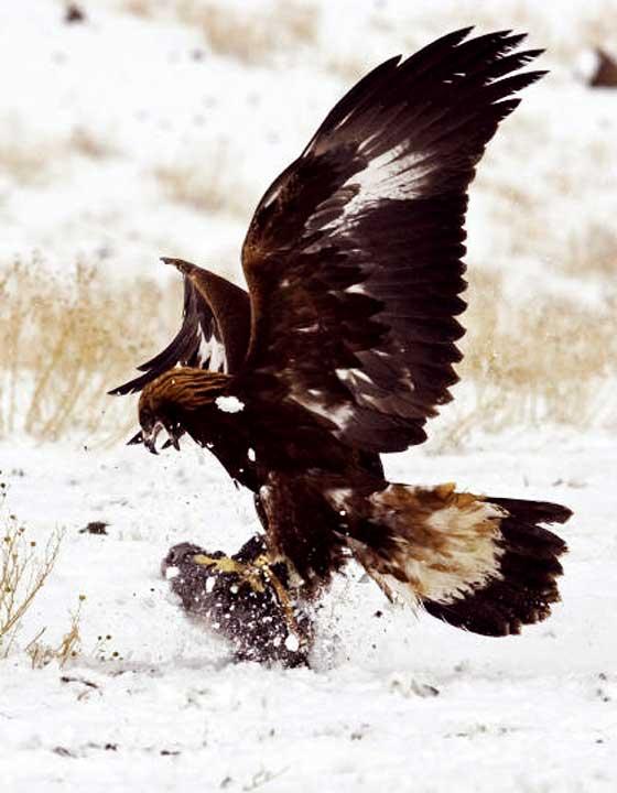 El halcón simboliza las virtudes del guerrero: calma, fuerza, agilidad y precisión