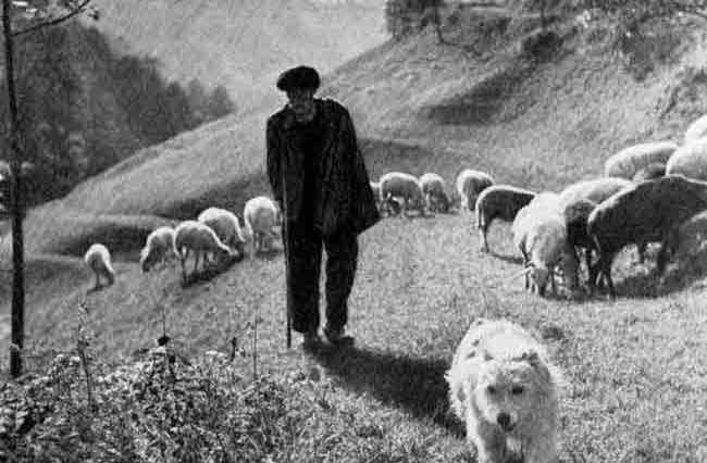 La tranquilidad y orden en el oficio de pastor