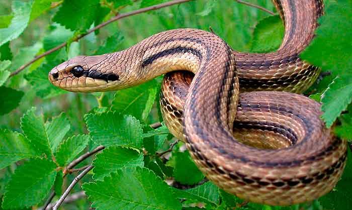 La astucia de la serpiente