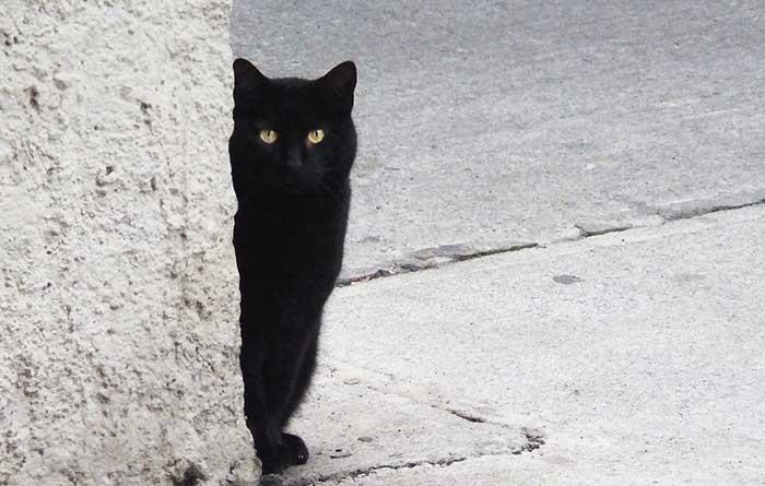 El gato es muy matizado, mudando continuamente